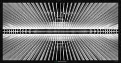 Beaming Oculus (Ilan Shacham) Tags: abstract architecture view scenic symmetry repetition spine oculus calatrava ny nyc bw blackandwhite minimalism fineart fineartphotography us usa geometry pattern