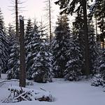 Harz-Oderbrueck_e-m10_1012074148 thumbnail
