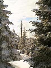 winter inside (michaelmueller410) Tags: bäume wald schnee snow forest trees winter harz sunny ckoudy wolkig sonnig