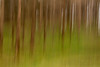 Two Valleys ICM - 20180309_2 (Graham Dash) Tags: icm twovalleys virginiawater windsorgreatpark intentionalcameramovement trees