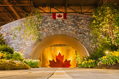 A Tree for Every Hero (A Great Capture) Tags: livingtribute interior indoors handheld lowlight iamcanadian proudcanadian proudtobecanadian patriotic westandonguardforthee ourhomeandnativeland canadianflag enercarecentre toronto canadablooms tunnel atreeforeveryhero agreatcapture agc wwwagreatcapturecom adjm ash2276 ashleylduffus ald mobilejay jamesmitchell on ontario canada canadian photographer northamerica torontoexplore winter l'hiver 2018 homeshow flowershow