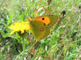 Butterfly 1622