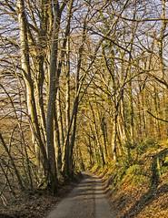 Dartmoor road (HHH Honey) Tags: sonya7rii minimoonxviii devon dartmoor landscape tokina2035mmlens tokina trees woods woodland shadows road beadonlane