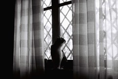 sometimes.. (pepe amestoy) Tags: blackandwhite indoor cats nikon fm2 nikkor 1850 trix 400 analog film