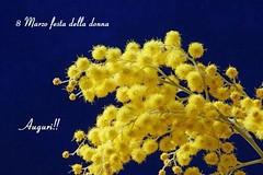 Women's Day--Best Wishes (johnfranky_t) Tags: johnfranky t riproduzione festa della donna fiori giallo