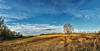 8R9A0347-49Ptzl1scTBbLGER (ultravivid imaging) Tags: ultravividimaging ultra vivid imaging ultravivid colorful canon canon5dm3 clouds scenic fields farm winter tree evening pennsylvania pa panoramic landscape sky