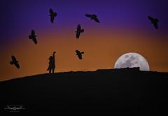 P2151047c-EditFAA (john.cote58) Tags: moon lunar sunset twilight birds crows ravens outside outdoors landscape contrast color colour wave aurevoir goodbye creativeedit montage night evening professional photography josephyvoncote interiordesign print hill silhouette