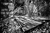 Forgotten (Andrea Trucchia) Tags: photo andreatrucchia riposo italia 3ds alberi photography toscana persone paesaggio barberinovaldelsa blackandwhite black cimitery cimitero nikon white
