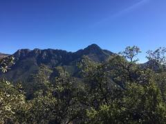 I believe that's Mt. Wrightson. (NYHikerJohn) Tags: vaultminetrail johnridge austinridge nyhikerjohn madera canyon arizona november 2016