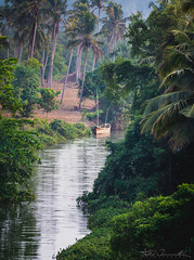 Riverside (The Dream Chaser) Tags: kerala nature beauty day green colour