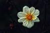 natural beauty (Kati471) Tags: naturalbeauty naturschönheit blüte wunderschön beauty blossom flower blume natur natural