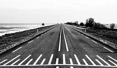 _DSC3102-2 (durr-architect) Tags: dike road almere lelystad oostvaardersplassen ijsselmeer lake markermeer ice water sea grass bike sky field
