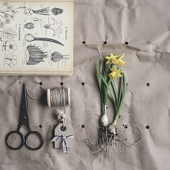 Plant a flower (Sylvia Houben) Tags: flatlay knolling plantaflowerday afamousquote quote flowers plantaflower