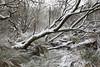 A rare snowy day in Brittany (Nadine Le Goff) Tags: neige snow winter hiver bois bog marsh swamp marais marécage arbre