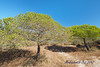 PA230109t (mrkevinw08) Tags: portugal algarve parquenaturaldariaformosa parque natural riaformosa