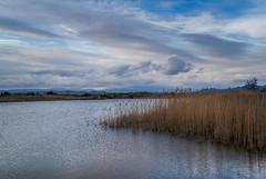 Wetlands (Karol ...) Tags: wetlands lagoon laguna landscape reeds wetlandsflora clouds textures water pond