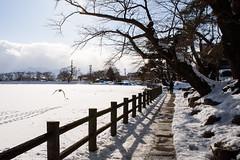 Frozen lake park (kat-taka) Tags: ã¬ãã park lake frost snow winter dog tree walk pond white snap bird