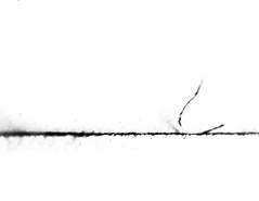 dustline (fe2cruz) Tags: 7dwf monochrome blackandwhite white blackwhite bw black mono teleconverter extension tubes macro macrocloseup tamron adaptall2 sp 90mm f25 α7r a7r alpha 2x maximacro 41magnification paper line dust macromondays imperfection wabisabi
