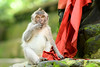 Surprised Monkey (good.fisherman) Tags: zoo animal monkey macaque toque macaco nature rhesus bali