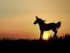 Joy (janinelee66) Tags: horse camargue sunrise orange colour france jump colt sun happy