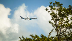 Visual Approach 👀 (Maxime C-M ✈) Tags: fly travel caribbean martinique airplane colors exotic beautiful clouds sky nature branches island paris aviation passion europe antilles