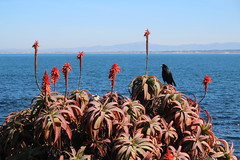 IMG_7618 (mudsharkalex) Tags: california pacificgrove pacificgroveca