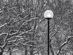 not o'er yet .... Winterscape 2018 #  80   ... ; (c)rebfoto (rebfoto ...) Tags: snow notoeryet rebfoto winterscape winterscape2018 winterscene blackandwhite monochrome bw