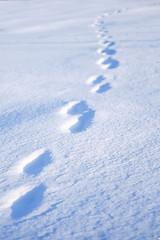 DSCF4162-Mikko-Ilmoniemi.jpg (jkl_metsankavijat) Tags: 35mm jyme jyväskylänmetsänkävijät partio xt1 eräkämppä kylmä lumi lämpö nuotio pakkanen partiohuivi partioscout pimeys scout scouting seikkailijat talvi talvivaellus trangia tuli vaellus vaeltaminen ystävät
