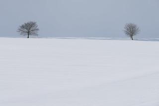 Snowline V