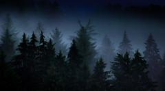 When Moon lit up the blue sky (Beppe Rijs) Tags: deutschland eos600 elbsandstein sachsen germany saxony sandstone blue blau summer tree baum sächsischeschweiz saxonswitzerland forest wald holz gehölz wood