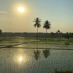 India-Wonderful sunset over the Karnataka rice fields2 thumbnail