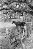 Bedford, Texas (RickC.) Tags: texas horse soviet fed 5b industar 35mm bw bwfp trix d76 kodak rangefinder 400tx