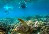 Apo island coral and sea turtle trip-1-4 (walterkolkma) Tags: apoisland philippines negrosoriental seaturtle snorkeling coral reef sun sea visayas siquijor turtle gopro
