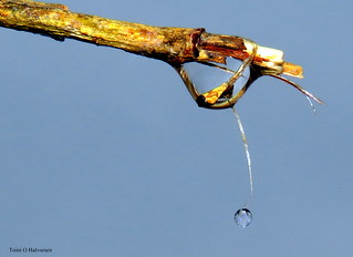 Water drops and blue sky = beautiful!