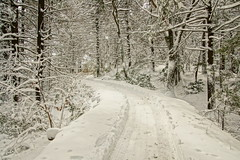 Making The Pretty Walkable (thetrick113) Tags: winterstorm snow noreaster winter2018 winter 2018 sonyslta65v eaglecliff mohonkmountainhouse mohonk shawangunkmountains shawangunkridge shawangunk shawangunks gunks ulstercountynewyork trees dicot forest northeast newyorkstate hudsonvalley hudsonrivervalley hdr coniferous deciduous