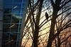 Diagonals (Carrie McGann) Tags: trees hawk bird architecture stairs lights mosaicmontagemonday diagonals hmmm montage nikon interesting