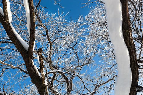 Winter patterns.