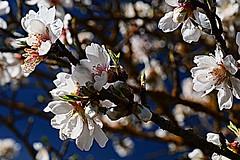 P1000486 (FABIÀ) Tags: 100v10f panasonic lumix dcg9 g9 leicadg leicadglens leicadg1260mm catalonia barcelona elvallès vallès vacarisses flowers closeup countrysise spring