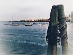 The Harbor (vwcampin) Tags: iphoneographer iphoneography iphonology iphoneology oilpainting painting boston massachusetts pier dock floating wharf ocean water harbor sailboats boats painterly bostonharbor