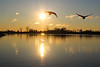 Swans over Sam Smith (O'Quinn Photo) Tags: colonelsamuelsmithpark samsmithpark etobicoke toronto morning swans silhouettes endofdaylightsavings fishing inflight lakeontario marina oquinn ontario earlyspring cold canada