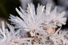 Vetro di Buran (STE) Tags: ghiaccio ice frozen frost frosty freddo cold inverno winter macro tamron90 cristalli crystals