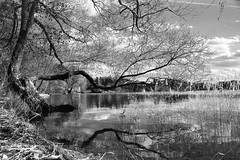 01 - [Red_filter] (stepanov9) Tags: type17svema minoltadimagescanelite5400 nikonf80 landscape water istra истра blackwhitefoto russia sigma monochrom analogphoto naturemasterclass rivers 28300mmf3563afcompactaspifhyperzoom lakes