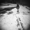 Tracks in the snow (seth.michael.kelly) Tags: holga120 expiredfilm kodaktrix320 trix txp320 320 blackandwhite bw snowday walk collegecampus kids snowtrails tracks boots noschool walkwithdad ohio woosteroh midwest holgasinmiddleamerica