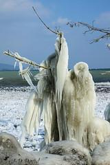 Fantôme de glace :-) (jean-daniel david) Tags: hiver lac lacdeneuchâtel glace gel ciel réservenaturelle suisse suisseromande switzerland yverdonlesbains arbuste nature