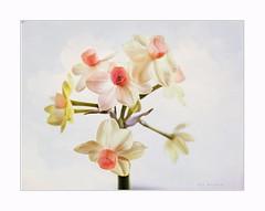 Blue in the sky (Krasne oci) Tags: flowerart flowers spring macro softcolors softness love daffodil white evabartos texturedphoto
