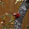 Color in the Winter Garden (austexican718) Tags: texas native fauna centraltexas hillcountry wildlife bird backyard garden animal nature winter