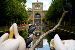 at the zoo (Marc R. A.) Tags: zoo water sky house building nature tree birds