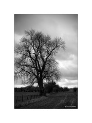 Il attend le printemps... (Laurent TIERNY) Tags: countryside campagne