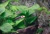 Acuario Fluvial (Juanedc) Tags: actuariodezaragoza aragón españa europa europe expo saragossa spain zaragoza acuario acuatico agua animal aquarium aquatic fauna fish liquid liquido peces pez water