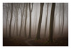 Friston Forest - March 9th (Edd Allen) Tags: forest trees tree treescape mist nikond610 nikon d610 70200mm landscape country countryside atmosphere atmospheric sunrise uk eastsussex woods woodland serene bucolic melancholy foliage leaves fristonforest fog spring pathway path